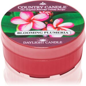 Country Candle Blooming Plumeria teamécses 42 g
